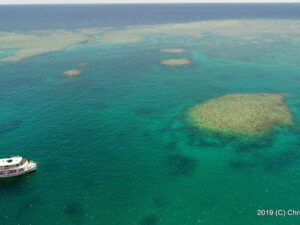 Hope for the Great Barrier Reef