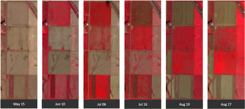 FIGURE 3. This image of a corn field in South Dakota, U.S., shows a time series over an agricultural area with some field analytics overlaid on the image. Courtesy: BlackBridge.